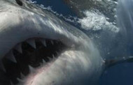 SHARK WEEK Returns with Jawtastic Programming, July 5-12