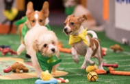 Canine Cuteness Unleashed With PUPPY BOWL XV