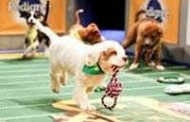 Animal Planet Gets PUPPY BOWL XI this February